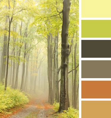 Forest Path Inspiration for Naturals Color Scheme