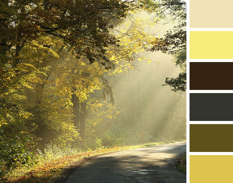 Sunlight on a Forest Road shines through trees color scheme inspiration
